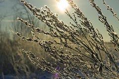 Zamarznięta trawa na nieba tle Zdjęcia Royalty Free
