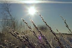 Zamarznięta trawa na nieba tle Fotografia Stock