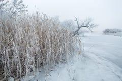 Zamarznięta zimy rzeka, drzewa w ranku i Obrazy Stock
