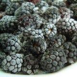 Zamarznięte czarne jagody zdjęcie stock