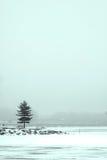zamarzniętego jeziora pojedynczy drzewo Obrazy Royalty Free