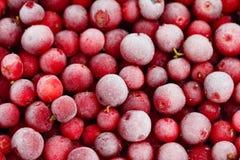Zamarznięty Ñ  owberry Zdjęcie Royalty Free
