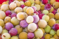 Zamarznięty agresta ribes uva-crispa Fotografia Royalty Free