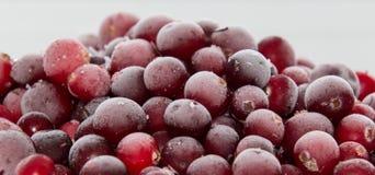 Zamarznięty cranberry Fotografia Royalty Free