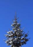 zamarznięty drzewo Fotografia Stock