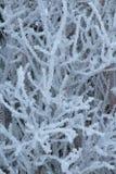 Zamarznięty drzewo Crystalized Zdjęcie Stock