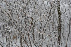 Zamarznięty drzewo (Kanada) Zdjęcia Royalty Free