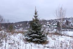 Zamarznięty firtree od outside Zdjęcia Stock