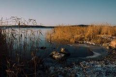 Zamarznięty Jeziorny brzeg Fotografia Royalty Free