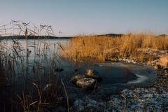 Zamarznięty Jeziorny brzeg Obraz Royalty Free