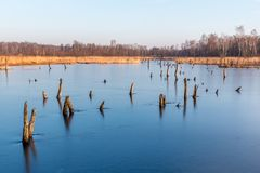 Zamarznięty jezioro w ranku Fotografia Stock