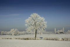 zamarznięty krajobraz Zdjęcia Royalty Free