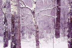 Zamarznięty las zdjęcie stock