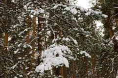 Zamarznięty las Obrazy Stock