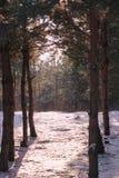 Zamarznięty las Zdjęcie Royalty Free