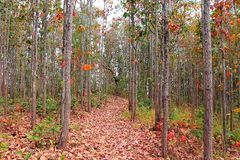 Zamarznięty las Obraz Royalty Free