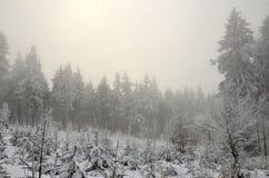 Zamarznięty las Obrazy Royalty Free