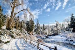 Zamarznięty parka krajobraz Zdjęcia Royalty Free