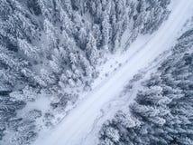 Zamarznięty Sosnowy las Od widok z lotu ptaka Obraz Stock