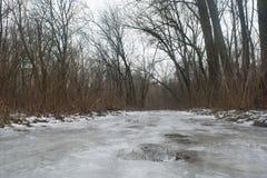 Zamarznięty sposób w zima lesie Obraz Stock