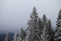 Zamarznięty zima las, niebo w mgle i Fotografia Royalty Free