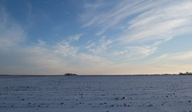 Zamarznięty zimy pole Fotografia Royalty Free