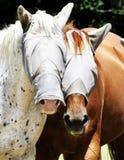 Zamaskowani konie Obrazy Royalty Free