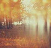 Zamazana abstrakcjonistyczna fotografia lekki wybuch wśród drzew Zdjęcia Royalty Free