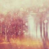 Zamazana abstrakcjonistyczna fotografia lekki wybuch wśród drzew Zdjęcia Stock
