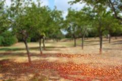Zamazana abstrakcjonistyczna fotografia lekki wybuch wśród drzew i błyskotliwości bokeh zaświeca Filtrujący wizerunek Obraz Royalty Free