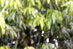Zamazana miękka część mangowa liścia drzewa zieleni natura piękna dla tła gospodarstwa rolnego, plama opuszcza krzakowi mangowego obraz royalty free