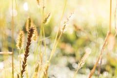 Zamazana netural rosy kropla na łąkowym bokeh tle Fotografia Stock
