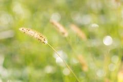 Zamazana netural rosy kropla na łąkowym bokeh zieleni tle Fotografia Royalty Free