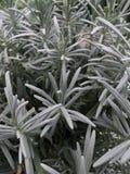 Zamazana roślina Zdjęcie Stock