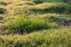 Zamazana rosy trawa Zdjęcie Stock