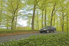 zamazana samochodowa lasowa wiosna Obraz Stock