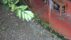 Zamazana zielona gałąź przeciw tłu wewnętrzny kamienisty podwórze dom podczas deszczu zbiory