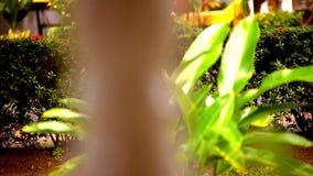 Zamazane klasyczne kolumny balas i deszcz zdjęcie wideo