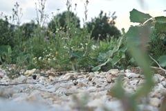 Zamazane wzrok rośliny Zdjęcia Stock