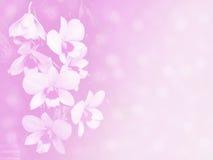 Zamazanego pięknego orchird miękki kolor dla tła Fotografia Stock