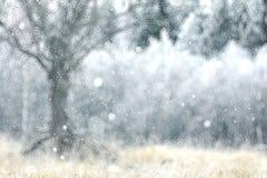 Zamazanego tła śnieżny las zdjęcie royalty free