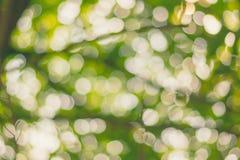 Zamazani bokeh światła przez trea liści Zdjęcia Royalty Free