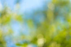 Zamazani liście na drzewie Fotografia Stock