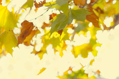 Zamazany żółty jesieni ulistnienie Zdjęcia Stock