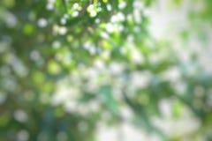 Zamazany drzewo Obraz Royalty Free