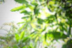Zamazany drzewo Zdjęcia Royalty Free
