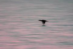 Zamazany estetyczny natury tła wizerunek nadwodny denny ptak przy obrazy royalty free