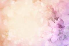 Zamazany i kolorowy okwitnięcie Zdjęcia Royalty Free