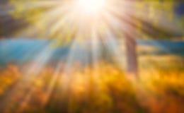 Zamazany jesieni słońce przy zmierzchem pod drzewem Fotografia Stock