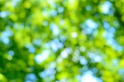 Zamazany lasowy tło Obrazy Royalty Free